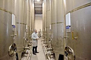 Bulk Olive Oil Supplier - OliveOilLovers com